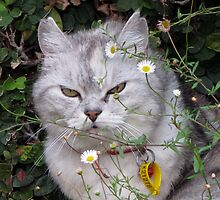 a catnappers delight - left outside overnight by geof