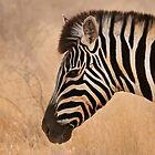 Zebra head by lucynab