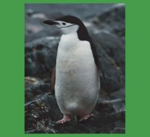 Special Chinstrap Penguin Kids Clothes