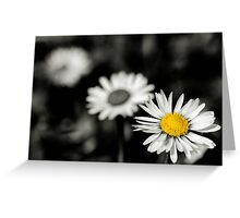 Daisy depth of field Greeting Card