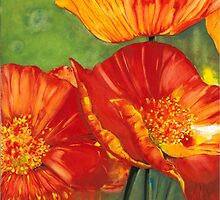 Hot Poppies by Kaye Miller-Dewing