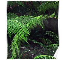 Fronds Poster