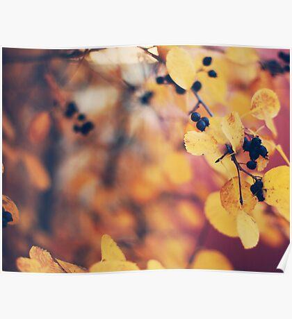 autumn walks Poster