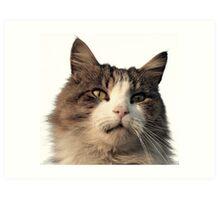 Wanlockhead Cat Art Print