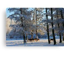 First Snow Canvas Print