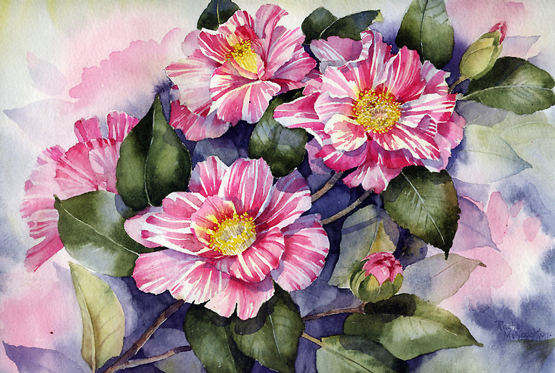 Striped Camellia by artbyrachel
