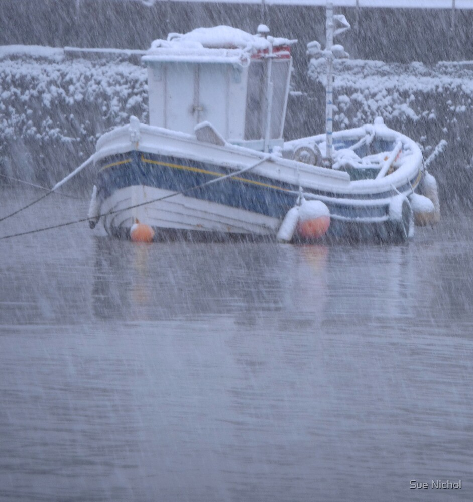 Seaton Rose in a Snow Storm by Sue Nichol