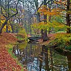 Silence, only the leaves float on the water by mike2048