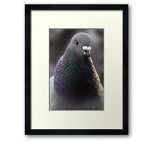 Pigeon - Hogganfield Loch Glasgow Framed Print
