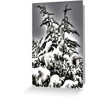Xmas tree Greeting Card