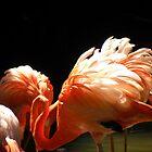 Ruffled Feathers by Megan Evorik