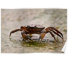 Crab 1 Poster