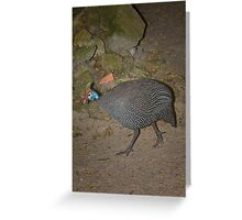 Walkabout G Bird Greeting Card