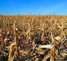 Harvested Corn Field - McCook, Nebraska by Nina Brandin