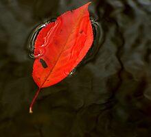 falling leaves by Mustafa UZEL
