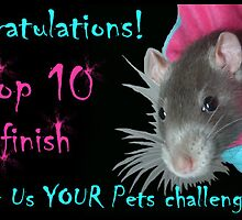 Top 10 for Show Us YOUR Pets by KanaShow