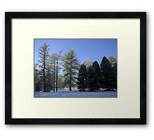 Tree groups Framed Print