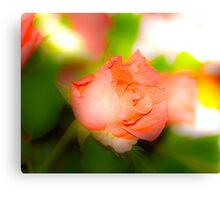 a single rose for you Canvas Print