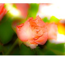 a single rose for you Photographic Print