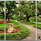 Oak Alley Triptych by Photography by TJ Baccari