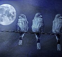 Moonlight Roost by CarolM