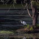 Intermediate egret #2 by Odille Esmonde-Morgan
