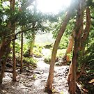 Hawaii by Skytles