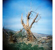 Forked Tree, Anza Borego, CA February 2010 Photographic Print