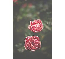 Pink Rose Pair Photographic Print