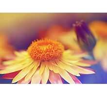 Softest Orange Petals Photographic Print