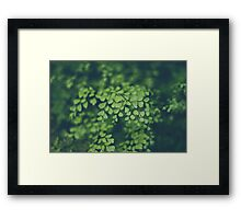 Maidenhair Fern Framed Print