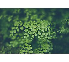 Maidenhair Fern Photographic Print