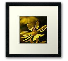 """Buzzed Daisy"" Framed Print"