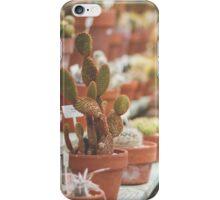 Cactus Conservatory iPhone Case/Skin