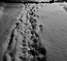 If On A Winter's Night... by Mojca Savicki
