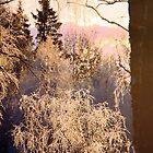 Magical Morning by Ritva Ikonen