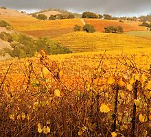 Autumn hills of Bennett Valley by Diane Nemea Laessig