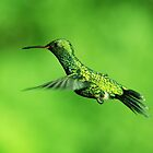 Canivet's Emerald Hummingbird by Robbie Labanowski