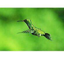 Canivet's Emerald Hummingbird Photographic Print