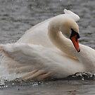Swan by Alexa Pereira