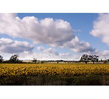 Majestic clouds over autumn vineyard Photographic Print