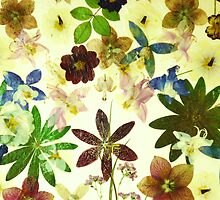 Floral May by Kaye Miller-Dewing