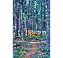 Rushing River Provincial Park Photographic Print