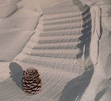 Pinecone by Ciarra Ornelas