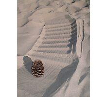 Pinecone Photographic Print