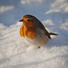 Robin Macro 3 by Gareth Jones
