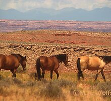 Horse of a Different Color by Monica Wolfson