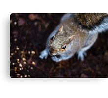 Too Nosey Canvas Print