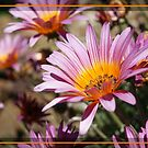 Daisies are like sunshine to the ground by michellerena