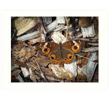 A Common Buckeye Art Print